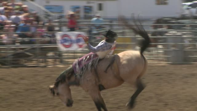 kswb the 51st annual lakeside rodeo on april 19 2015 bull and bronco riders the calf steer wrestlers and barrel racers - bucking bronco stock videos & royalty-free footage
