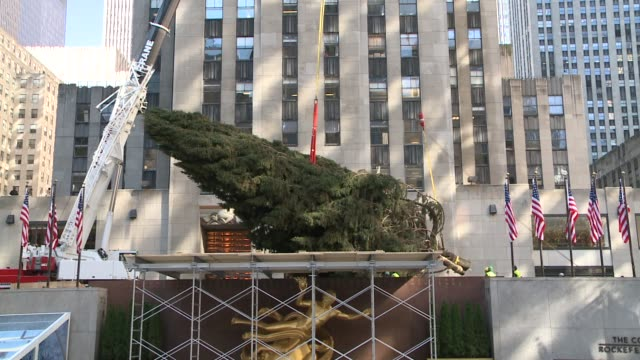 the 76-foot tall spruce arrived from connecticut and is ready to be decorated. the tree ceremony will take place on december 4th, and will remain up... - illuminazione dell'albero di natale del rockefeller center video stock e b–roll