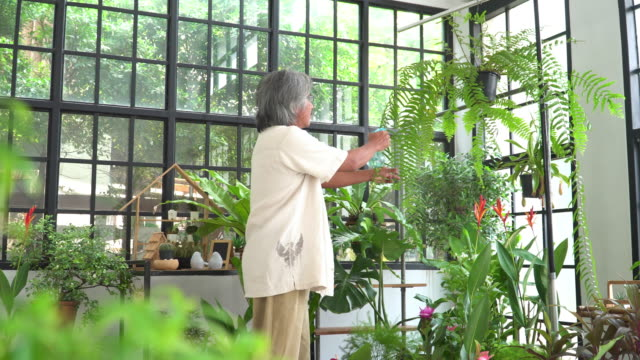 the activity of asian active senior man with white hair after retirement as an environmentalist,  florist having happiness, relaxation with the tropical tree as nepenthes, watching, enjoying gardening as hobbies, and small business in the greenhouse. - tropical tree stock videos & royalty-free footage
