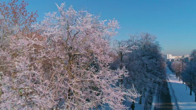 the aerial drone view along the street with the park, trees covered by frost, residential and office buildings. climbing camera motion. - sunny stock videos & royalty-free footage