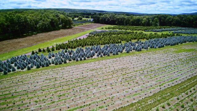 the aerial panoramic drone video of the christmas trees farm in poconos, pennsylvania - pennsylvania stock videos & royalty-free footage