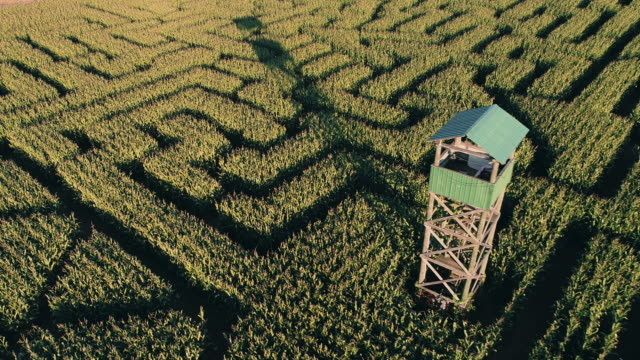 the aerial scenery panoramic drone video of the huge halloween's corn maze in pennsylvania, poconos region - twilight stock videos & royalty-free footage