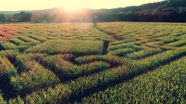 stockvideo's en b-roll-footage met de luchtfoto landschap panoramisch drone video van het enorme halloween maïs doolhof in pennsylvania, poconos regio - doolhof