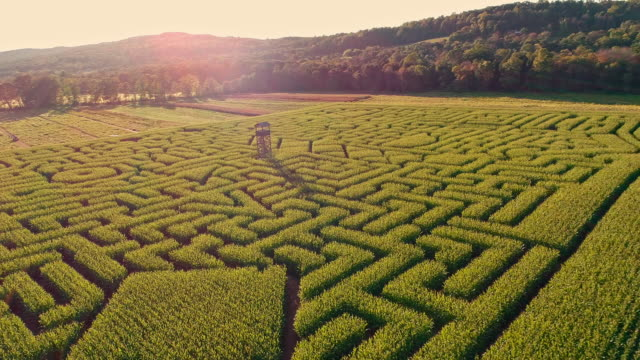 the aerial scenery panoramic drone video of the huge halloween's corn maze in pennsylvania, poconos region - puzzle stock videos and b-roll footage