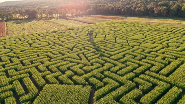 the aerial scenery panoramic drone video of the huge halloween's corn maze in pennsylvania, poconos region - maze stock videos & royalty-free footage