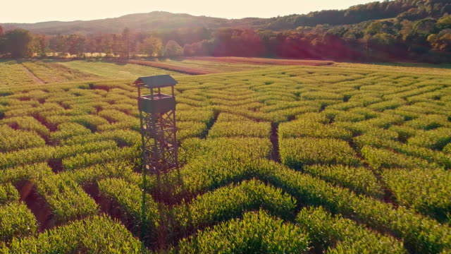 the aerial scenery panoramic drone video of the huge halloween's corn maze in pennsylvania, poconos region - halo stock videos and b-roll footage