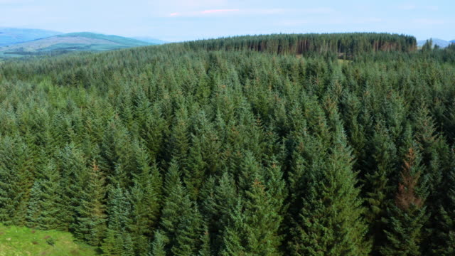 the aerial view from a drone of an area of pine forest in rural dumfries and galloway, south west scotland - galloway scotland stock videos & royalty-free footage
