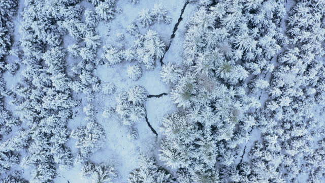 the aerial view looking straight down onto fir trees covered in snow in dumfries and galloway south west scotland - woodland stock videos & royalty-free footage