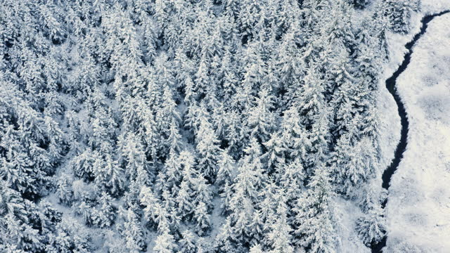 the aerial view of fir trees covered in snow in dumfries and galloway south west scotland - woodland stock videos & royalty-free footage