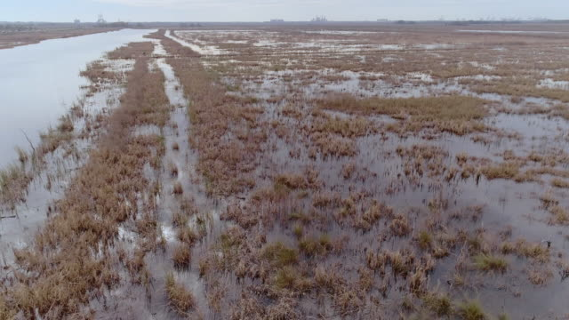 the aerial view of the swamp on the abandoned recultivating rice field in south carolina on the border with georgia, with the remote view of savannah at the horizon. drone video footage with the descending camera motion. - south carolina stock videos & royalty-free footage