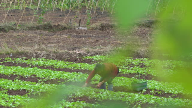 the aging labor population and lower mechanic investment in some rural areas, are still the main problems china's agricultural modernization faced. - crop stock videos & royalty-free footage