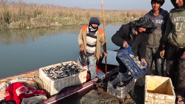 the ahwar of southern iraq -- also known as the iraqi marshlands -- draws global attention with its natural beauty. the mesopotamian marshes, a... - basra stock videos & royalty-free footage