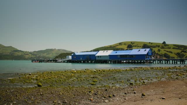 the akaroa wharf, new zealand - akaroa stock videos & royalty-free footage