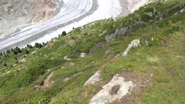 the aletsch glacier in the swiss alps. - berner alpen stock-videos und b-roll-filmmaterial
