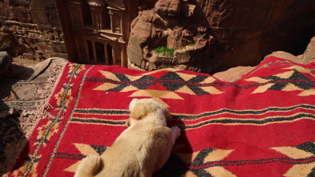 the al-khazneh tomb in the city of petra viewed from above with puppy dog. - ベドウィン族点の映像素材/bロール