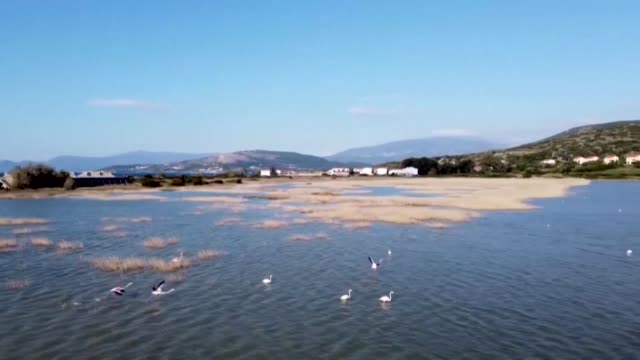 vídeos de stock e filmes b-roll de the alyki psili amos wetland on samos is an important habitat for numerous bird species including the greater flamingo which finds a safe haven in... - samos
