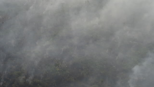 the amazon burns in porto velho brazil on august 23rd and 24th 2019 the world's largest rainforest brazil's amazon is burning at a record rate... - burning stock videos & royalty-free footage