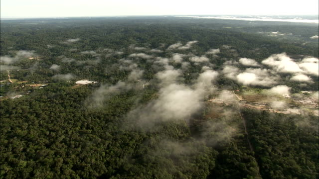 the amazon rainforest canopy stretches toward the horizon. available in hd. - copertura di alberi video stock e b–roll