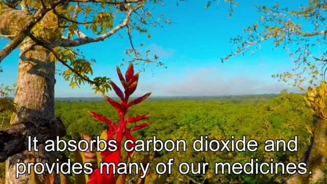 the amazon rainforest is often called the lungs of our planet. it absorbs and processes carbon dioxide and it produces a large portion of the oxygen... - other点の映像素材/bロール