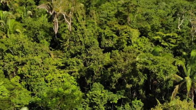 the amazon rainforest - brasilien stock-videos und b-roll-filmmaterial