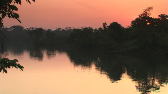 the amazon river reflects trees and a rosy sky. - south america stock videos & royalty-free footage