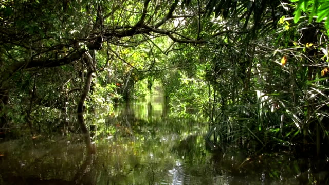 stockvideo's en b-roll-footage met the amazon river - tropisch regenwoud
