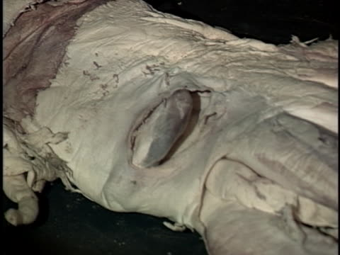 the american museum of natural history displays the body of a giant squid - tentacle stock videos & royalty-free footage