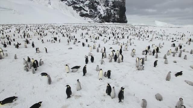 the antarctic - twenty thousand pair of emperor penguin at cape washington - idyllic stock videos & royalty-free footage