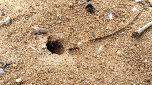 the ants were busy clearing the cave before the rain - heap stock videos & royalty-free footage