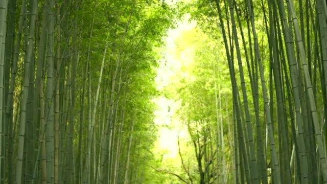 vidéos et rushes de le bosquet du bambou de arashiyama, style japonais jardin de bambou, kyoto, japon. - temple