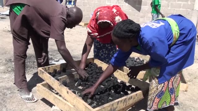 the arrival of tens of thousands of nigerian refugees to the camp of minawao in the far north of cameroon has led to a savage cutting of trees in a... - reforestation stock videos and b-roll footage