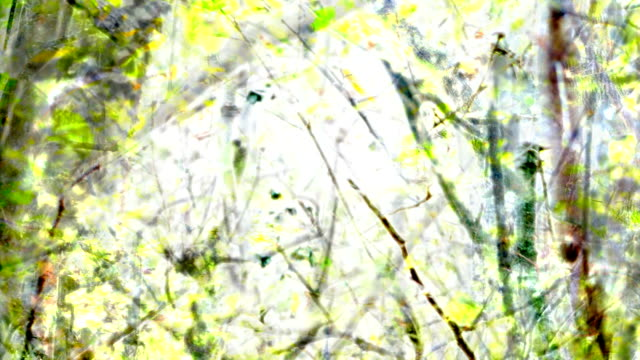 the artist's view : mixed forest - vibrant (fade in/out) - fade out stock videos & royalty-free footage