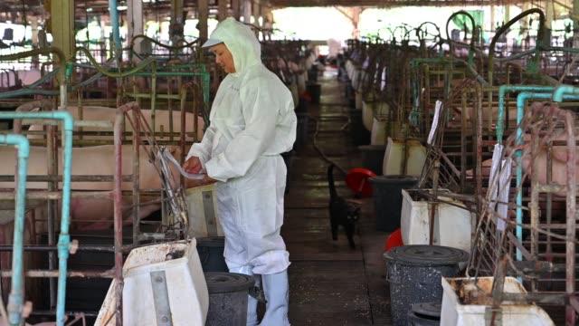 stockvideo's en b-roll-footage met de aziatische dierenartsen buigt zich over de gezondheid en de injectie van piggy uit varken pen. varken-farm - kleine groep dieren