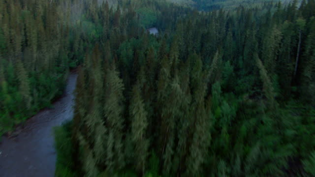 the athabasca river winds through a boreal forest near fort mcmurray, canada. - boreal forest stock videos & royalty-free footage