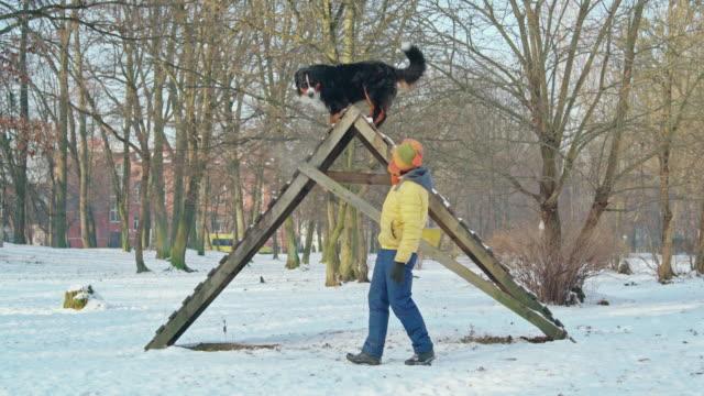 vídeos y material grabado en eventos de stock de la atractiva mujer de 50 años de edad madura activa entrena a su perro de montaña de bernese sheppard como para caminar sobre las escaleras altas en el parque - 50 54 years