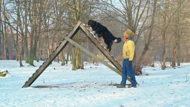 die attraktive aktive reife 50 jährige frau trainiert ihr berner berg sheppard hund wie zu fuß über die hohe treppe im park - 50 54 years stock-videos und b-roll-filmmaterial