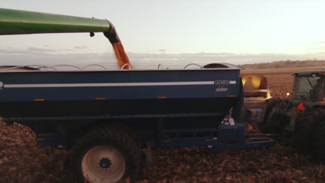 The auger from a combine empties corn into a wagon as both drive down the field harvesting with lights on in the early evening.