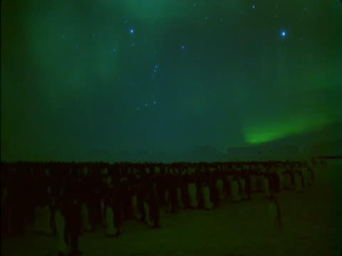 the aurora australis shimmers over a large colony of emperor penguins. - aurora australis stock videos & royalty-free footage