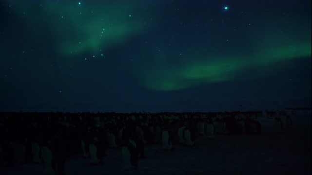 the aurora australis swirls over a colony of emperor penguins in the antarctic winter. - aurora australis stock videos & royalty-free footage