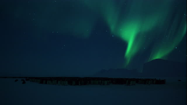 the aurora australis swirls through the sky over a colony of emperor penguins. - aurora australis stock videos & royalty-free footage