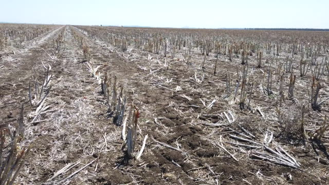 the australian bureau of meteorology has declared the ongoing drought across the murray darling basin to be the worst on record with current... - dürre stock-videos und b-roll-filmmaterial