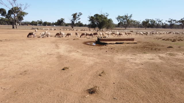 the australian bureau of meteorology has declared the ongoing drought across the murray darling basin to be the worst on record with current... - drought stock videos & royalty-free footage