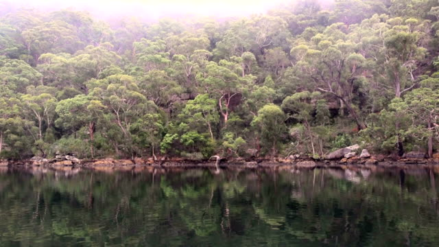 The Australian bush, fog and river,  Pittwater