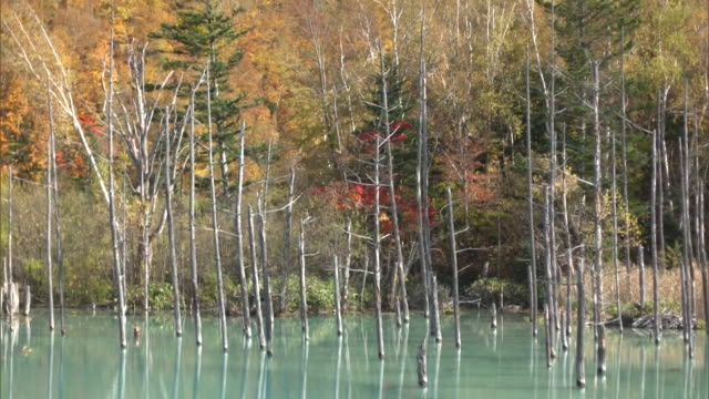 The autumn leaves on the shore of the Shirogane Blue Pond