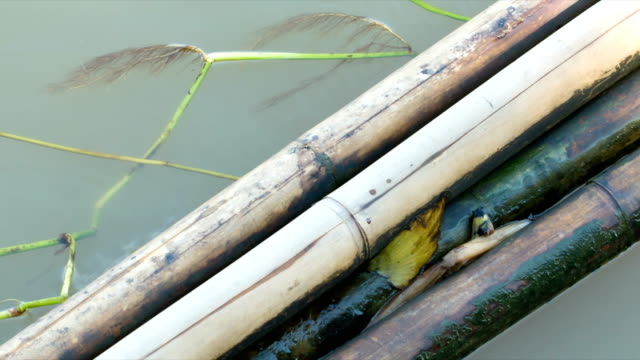 the bamboo wooden trunks are tied together floating on the water as barrier to prevent trash and water hyacinth into the riverbank. clean brown water weaving and can see smalw fish around.slow motion video. - water flea stock videos and b-roll footage