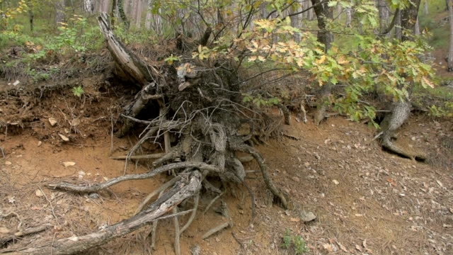the bare roots of trees