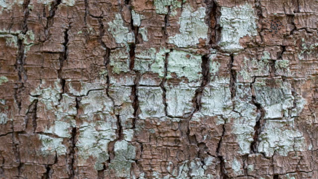 the bark tree image close up in the wood - wood grain stock videos and b-roll footage