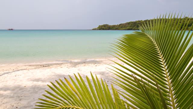 Den Strand und die Palmen