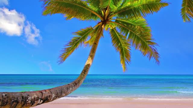 のビーチ - 熱帯気候点の映像素材/bロール