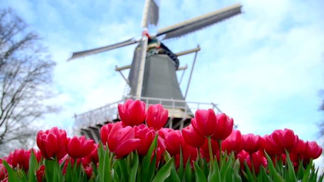 the beautiful flowers of the keukenhof - netherlands stock videos & royalty-free footage